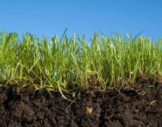 The thriving ecosystem in your lawn's soil and why it matters