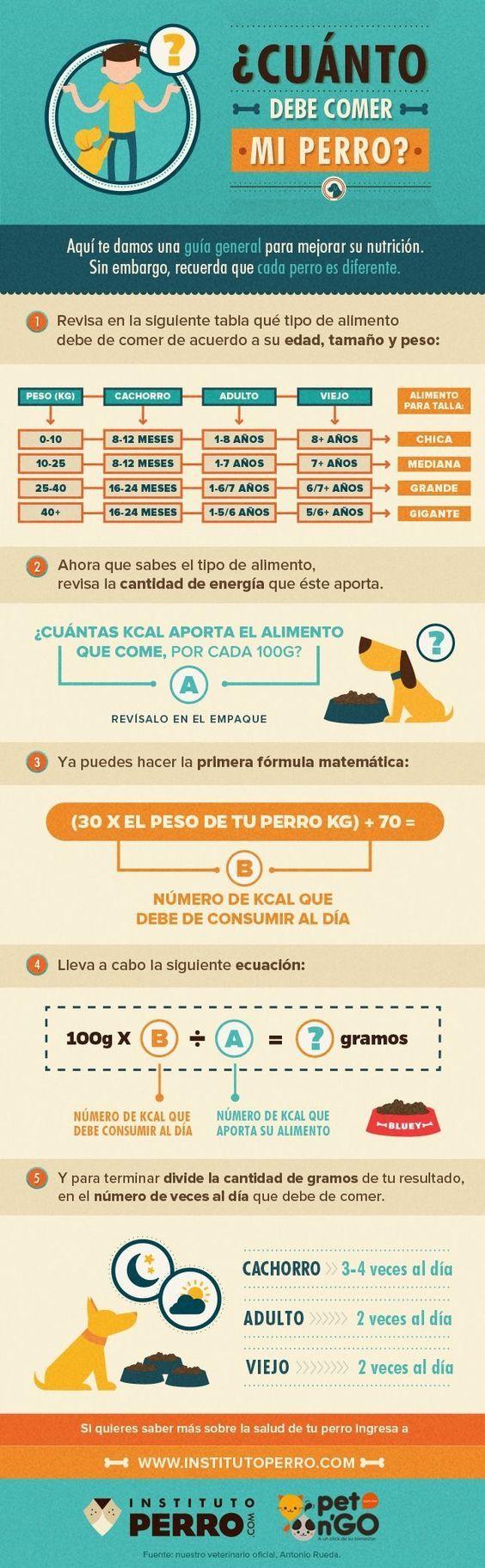 Cuanto debe comer tu perro