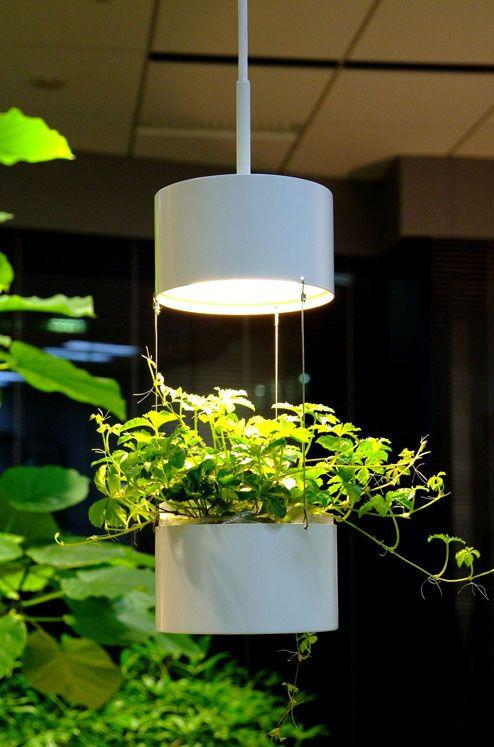 植物を組み合わせたペンダントライト。The pendant light which combined the plant.