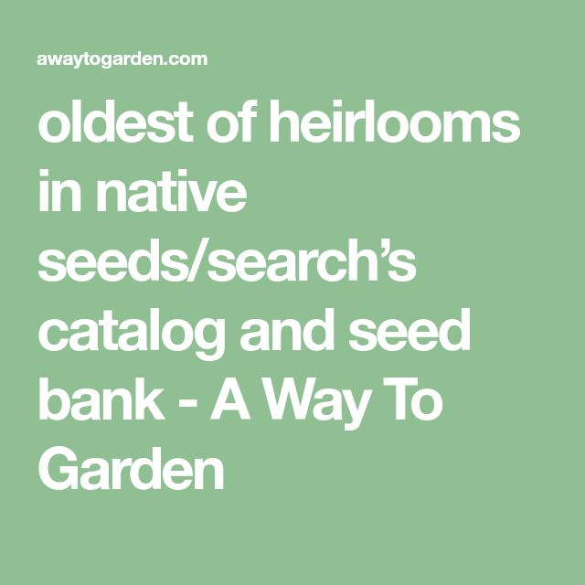 oldest of heirlooms in native seeds/search's catalog and seed bank - A Way To Garden