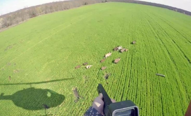 #Hunting_hogs_from_helicopter_in_Texas