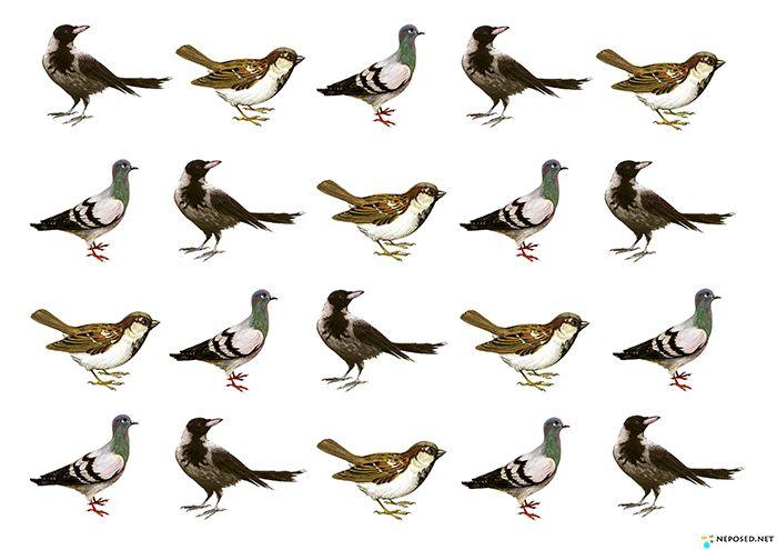 занятие с детьми 1-3 лет птицы