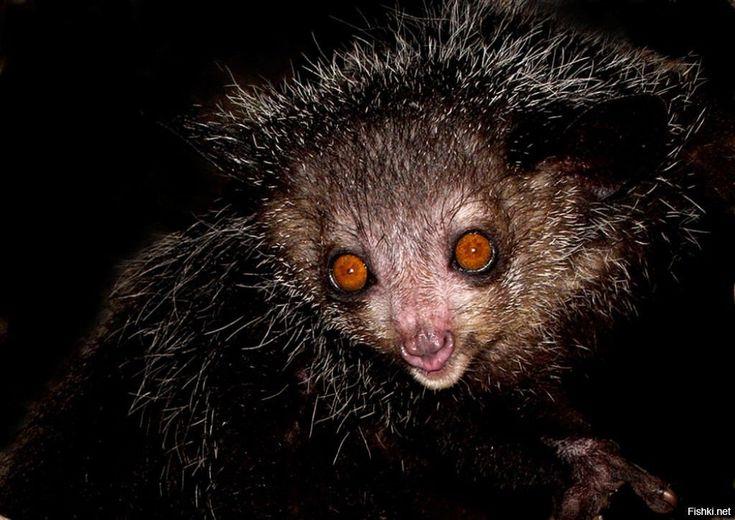 Картинки страшные животных