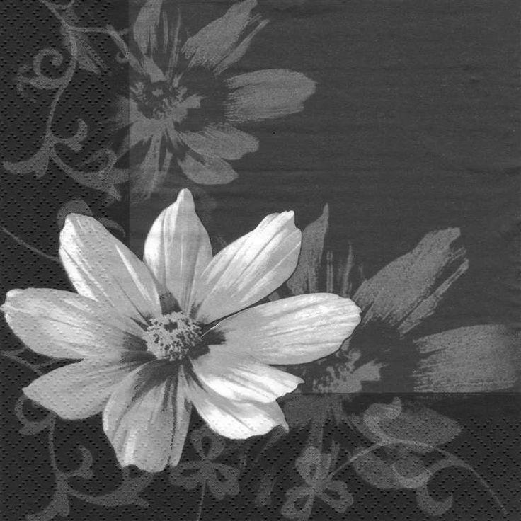 White flower on black lunch napkin #9623173 $4.99 www.lambertpaint.com