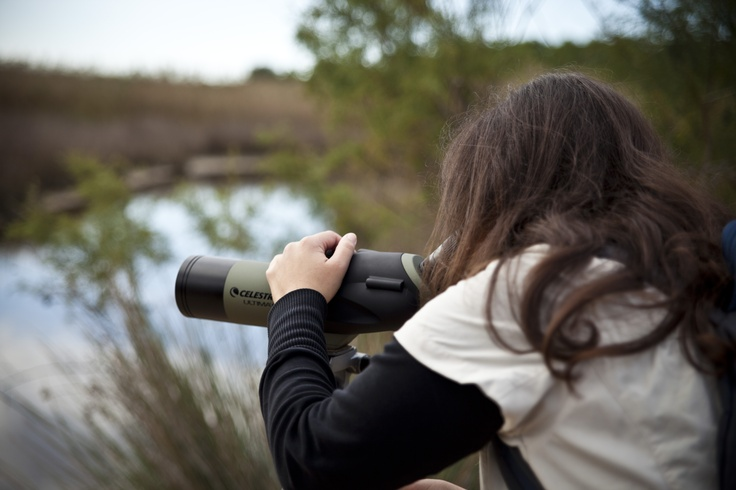 Bird lovers can now visit the Sani Wetlands on a private tour and admire the amazing wealth of birdlife. Location: Halkidiki, Greece