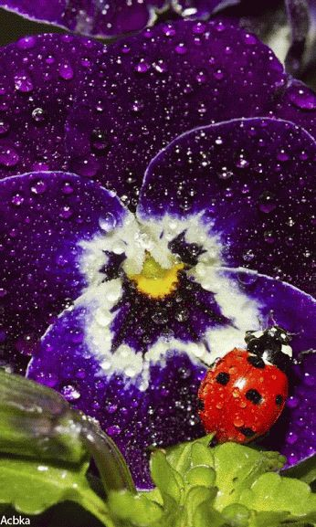 17 best images about flowers and ladybugs on pinterest