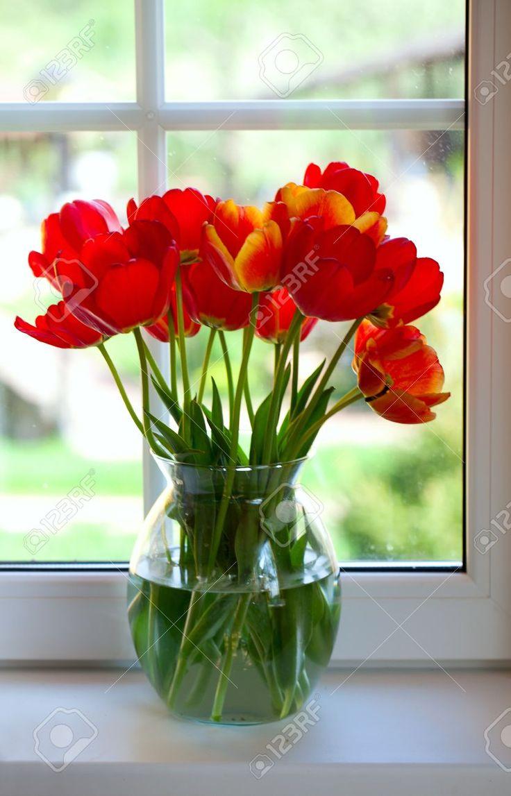 Tulipani Sul Davanzale Della Finestra Foto Royalty Free, Immagini, Immagini E Archivi Fotografici. Pic 19690878.