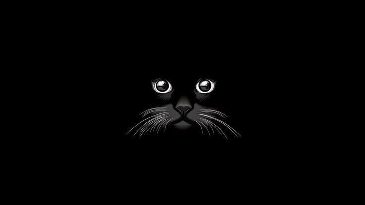 1920 X 1080 Katzenvektor Hd Tiere 4k Hintergrundbilder Bilder Hintergrunde Fotos Cat Vector Artistic Wallpaper Minimalist Wallpaper