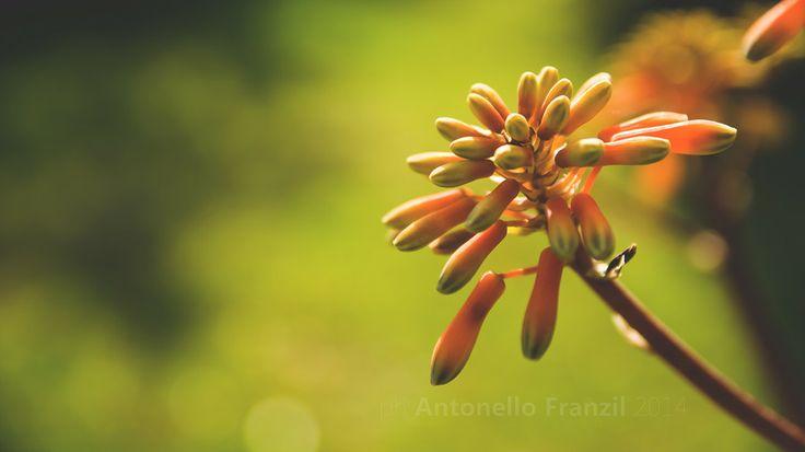 Giardino di Primavera in Sardegna - Arancione by Antonello Franzil on 500px