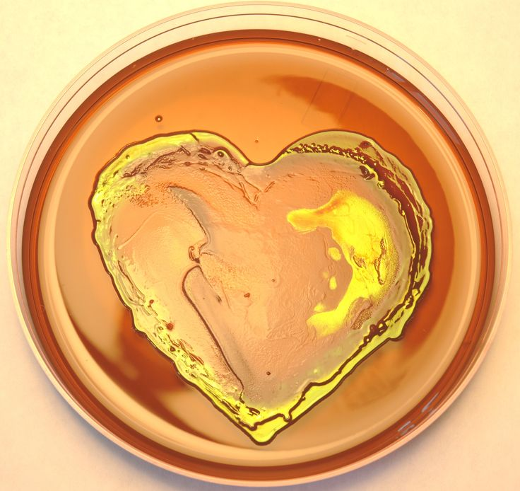Two strains enterobacteria isolated from rain and mixed together as a heart shape. Agar: Eosine Methylene Blue Agar Incubation Conditions: 48 hours at 20°C.