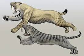 Image result for extinct big cats