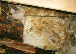 Dry rot at the mycelium stage. Mycelium is a cotton wool like sheet of dry rot fungus: http://www.wisepropertycare.com/dry-rot #dryrot #damp #leaks #propertycare #propertyproblems #property #realestate #home #DIY #homeimprovement #rot #wetrot #dampproofing