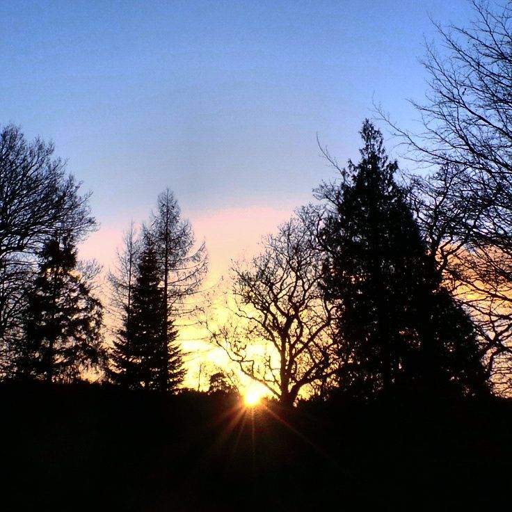 A lovely sunset with silhouette of some evergreen trees at Tilgate Park.. #sunset #flowers #silhouette #evergreen #landscape #landmark #amazingsky #nature #tilgatepark #crawley #sussex