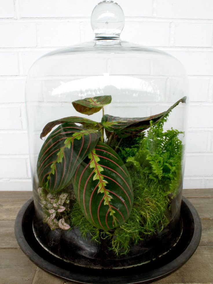 Decide on Open or Closed. Before you begin building your terrarium (yes, terrariums are the secret for all you black thumbs) decide if you should create an open or closed one. We went with a closed version that had a glass cloche top, which is best for tropical plants. Open terrariums with succulents and cacti are best for warm climates that receive lots of direct light.