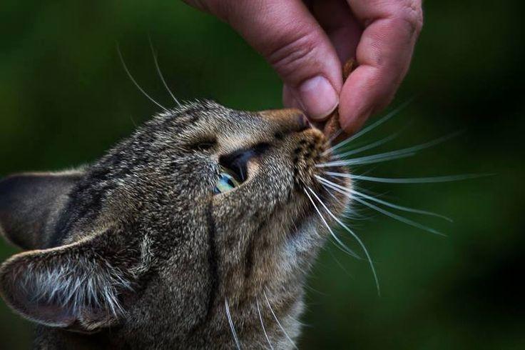 Bobby de huiskat krijgt lekker kattensnoepje