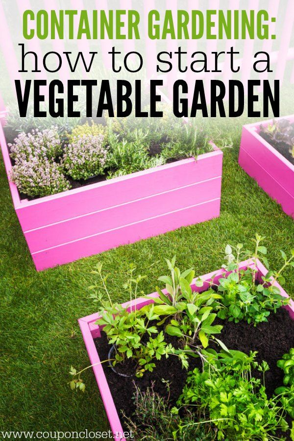 Container Gardening How to start a Ve able Garden