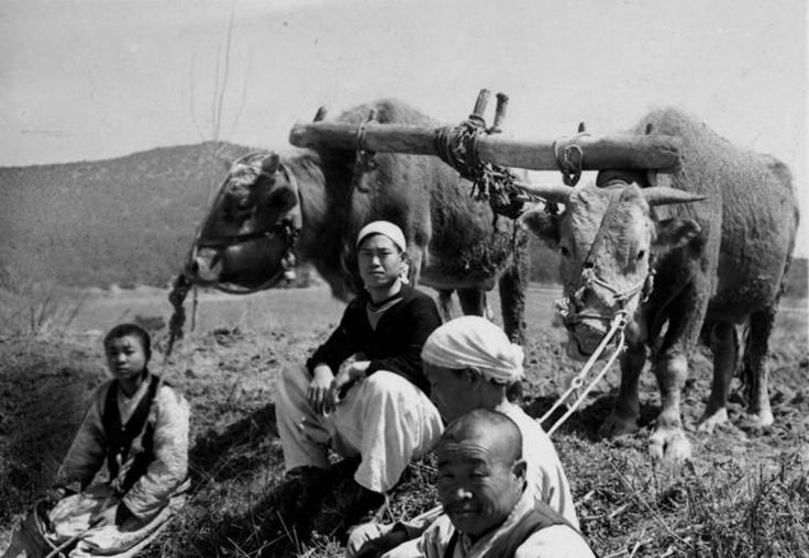 """Farmers sit in a field with their team of oxen. Under colonial rule, North Korea's agriculture production was directed toward supporting Japan's food supply. Today, the country -- which is less than 25 percent arable land -- depends on farming for much of its food supply. Members of the North Korean army are even required to serve as farmers. According to one defected soldier, """"North Korea can't farm without the army.… The North Korean army's main job is malnutrition eradication."""""""