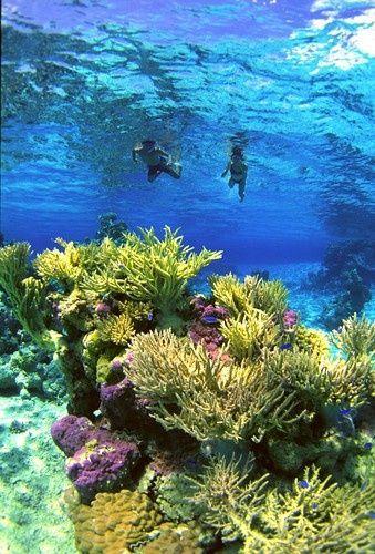 French Polynesia snorkeling