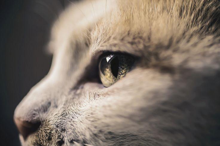 https://flic.kr/p/AR1Lab | Cat's Vision