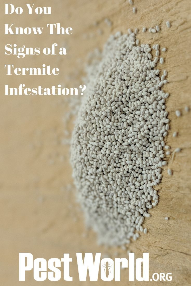 A Termite Infestation Can Create Costly Damage For A Homeowner Spot An Infestation Early With These Top 5 Signs That Termite Infestation Termites Infestations