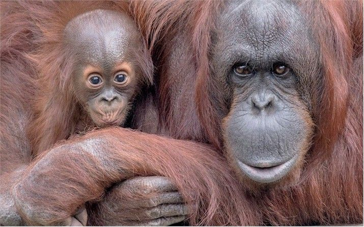 Zoo babies! Can you handle the cuteness? Save $7 Off Admission Tampa'sLowryParkZoo http://www.destinationcoupons.com/florida/tampa/tampa-zoo/tampa-zoo-coupons.asp #Tampa #Zoo #Coupons #Deals