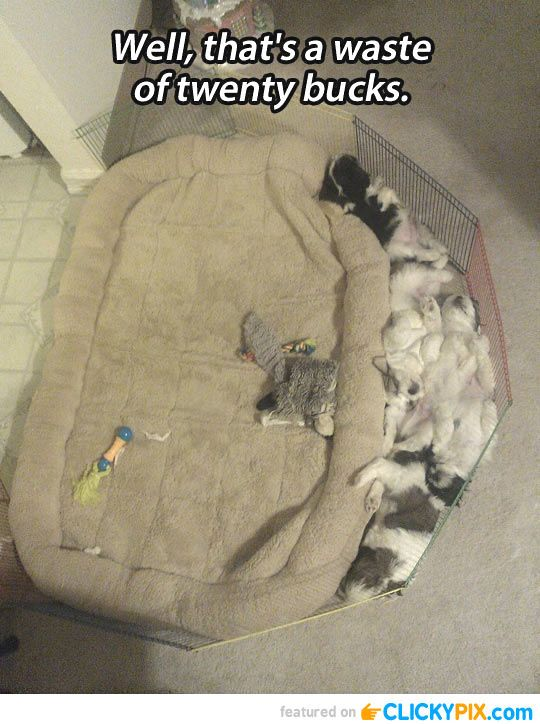 32 Funny Pictures with Captions - Clicky Pix