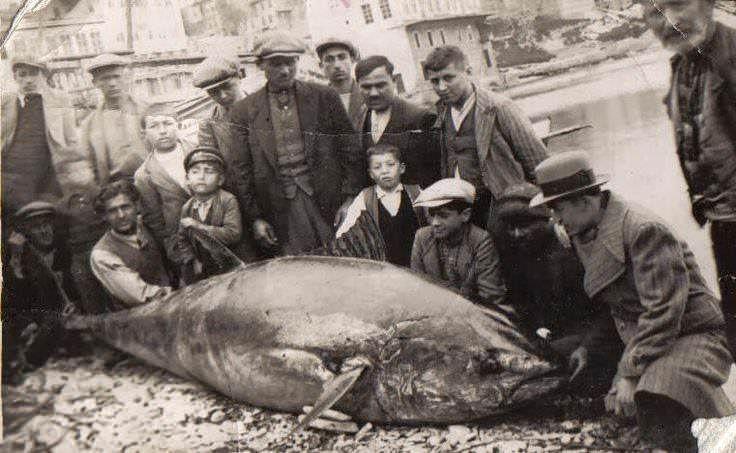 İstanbul Boğazı'nın balıkla dolu olduğu yıllar