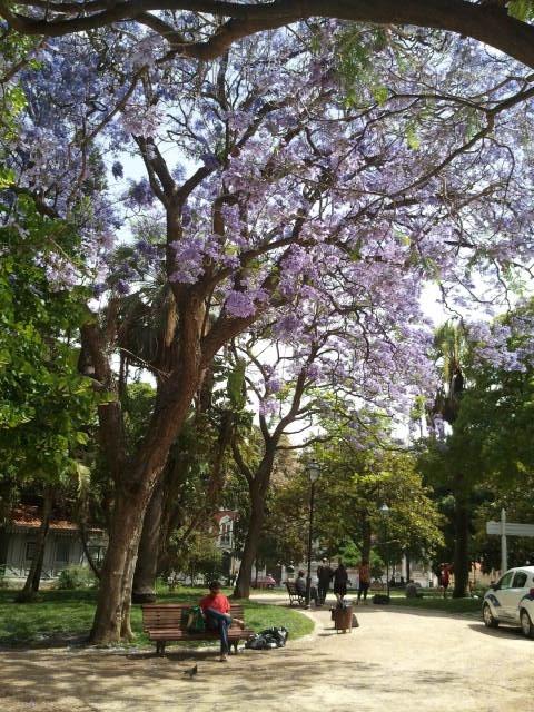 Príncipe Real garden - Lisbon