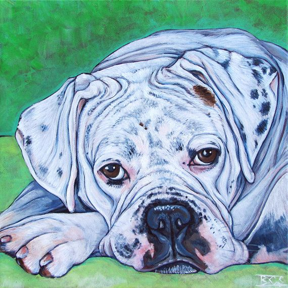 """12"""" x 12"""" Custom Pet Portrait, Acrylic Painting on Canvas of One Dog, Cat, Pets, Boxer and Bulldog example. Pet lover memorial dog lover art, Pet Portraits by Bethany $170.00  Merlin the White Boxer and American Bulldog Mix"""
