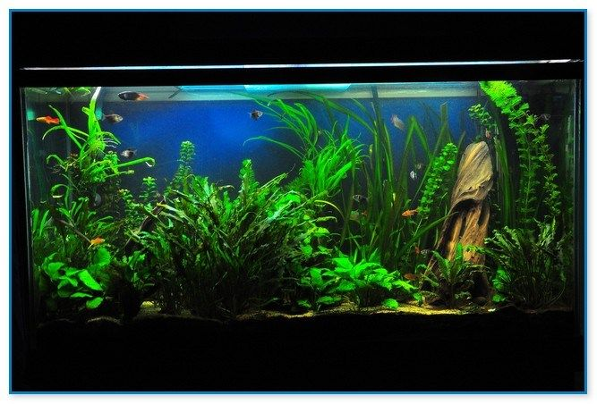 basic aquarium guides