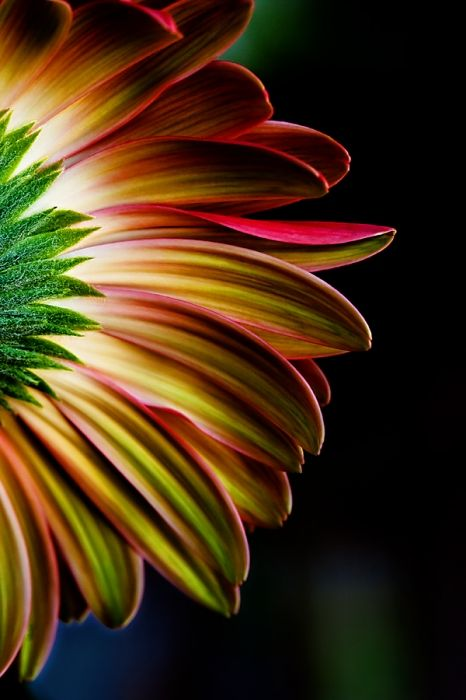 You rarely see pics of the back of a flower. Cool! By: Carolyn Gallo using macro photography.