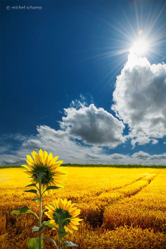 me-lapislazuli:  Salute to the Sun   by mmpschamp   http://ift.tt/1K2BPIz