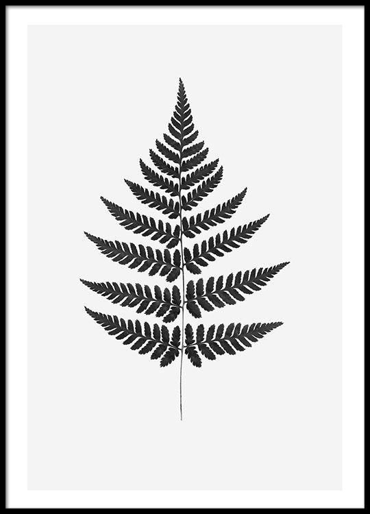 Plakat mit botanischem Motiv.