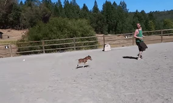Tiny Baby Horse Chasing Its Human – I Want One! (VIDEO)