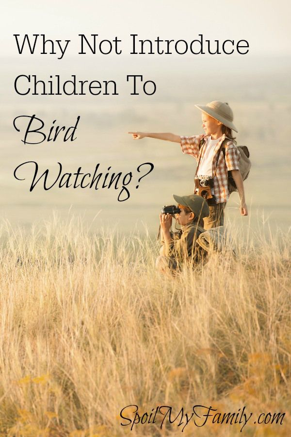 Bird watching can be an amazing lifetime hobby and it's perfect to start when your children are young. Young children are naturally curious and are sponges for knowledge. They love animals and so it just seems like a perfect fit! www.spoilmyfamily.com #birdwatching #familytraditions