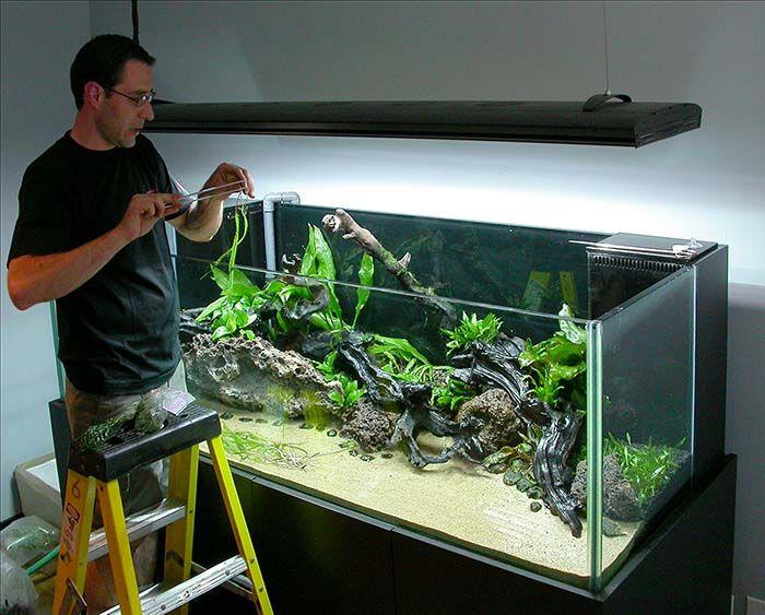 Aquascaping Live