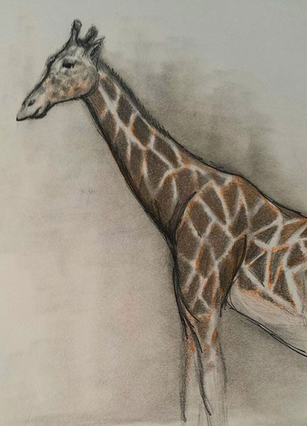 animals drawing zoo animal nature pencil field drawings sketches trip zoos