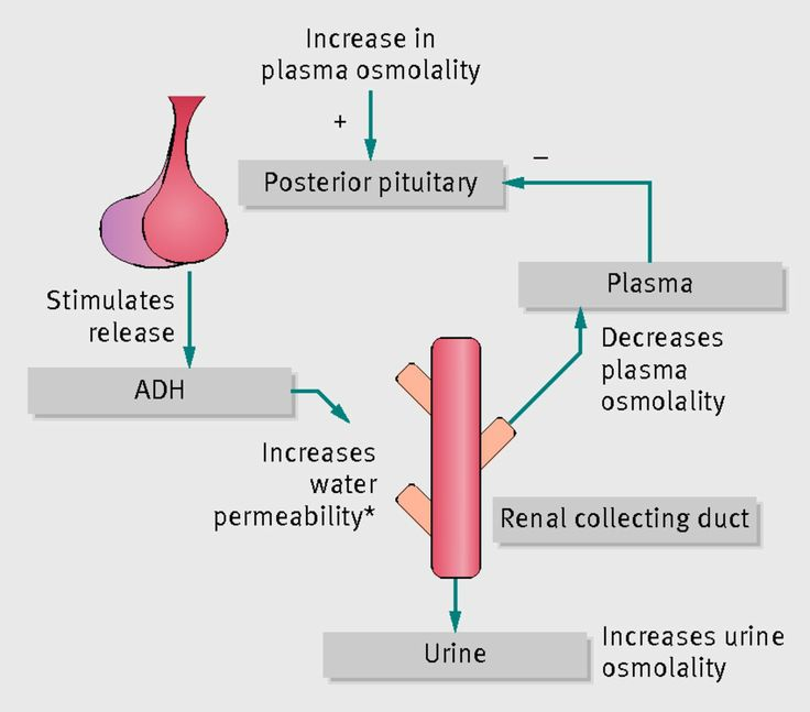 relationship between vasopressin and oxytocin