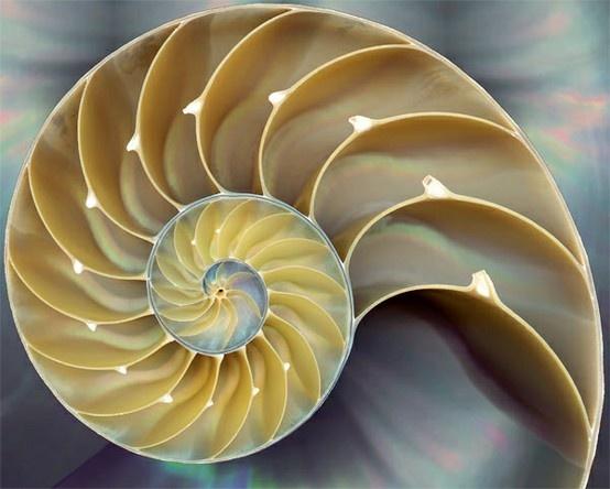 Die besten 17 Bilder zu Natural forms auf Pinterest | Aufsatz ...