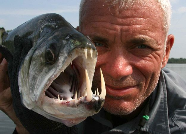 "21 Of The Freakiest Fish Caught On ""River Monsters""  An entire list of ""nopefish"""