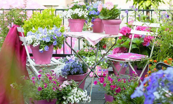 Piante da balcone: tutte le piante e i fiori per un balcone perfetto!   I sempreverdi