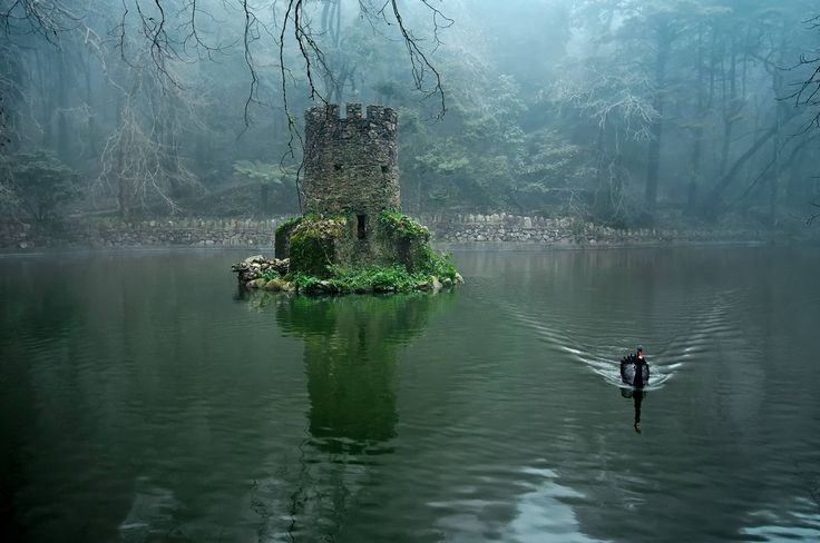 Favorite Places, Sintra Portugal, Black Swan, Mornings Coffee, Castles, Islands, Animal Stories, The Swan Princess, Fairies Tales