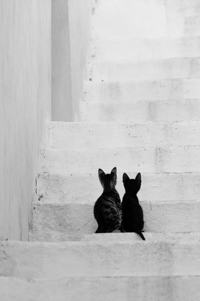 The two black cats really act as a strong focal point on the white stairs