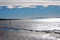 Miranda Coastline, Firth of Thames, NZ