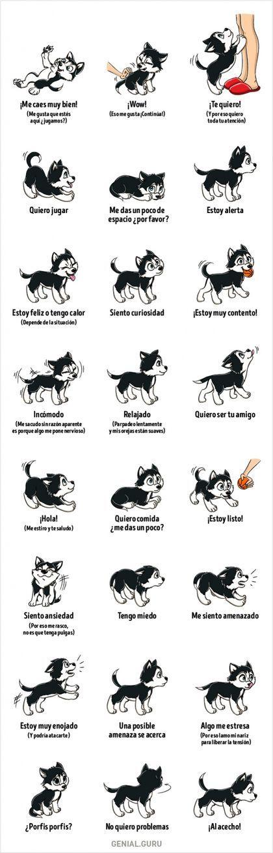Breve diccionario del comportamiento canino. -  Taringa!