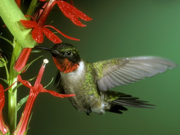 Hummingbirds fill my heart with joy!  I love having hummingbird feeders on my porch and in my garden so that they visit frequently.