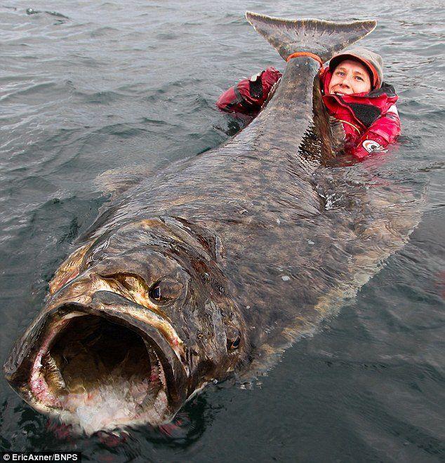 130 best sea fishing images on pinterest photo credit for Halibut fishing alaska