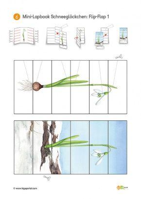 6-Titel-Schneegloeckchen-KiGaPortal-Kindergarten-Vorschule-Grundschule-Fruehblueher-Schneegloeckchen-Lapbook-Blumen-Projektarbeit-Sachunterricht-Natur-Freiarbeit