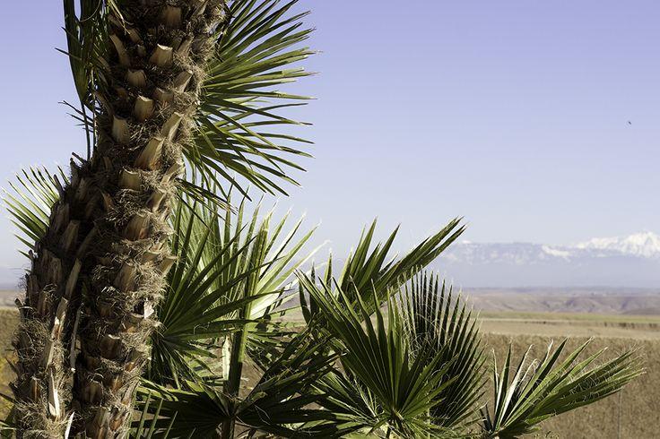 Sofie Martine blog - Marrakech Morocco Africa travel jeep safari