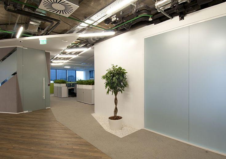 Фикусы и кактусы: как озеленяют современные офисы :: РБК Недвижимость